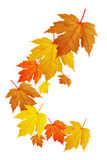 Leaves Falling Royalty Free Stock Photo