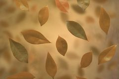 Leaves falling Stock Images