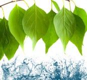 Leaves falling Stock Image