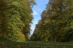 Leaves falling in autumn at Lime Avenue, Nowton Park stock photo