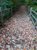 Fallen Leaves royalty free stock images