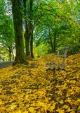 Aa bench in the autunm leaves royalty free stock images