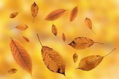 Leaves falling on ground over autumn background Royalty Free Stock Images
