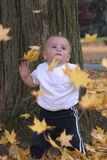 Leaves Falling on Me. A toddler boy watching leaves fall stock photo