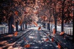Leaves falling in the park in Paris. Ile aux cygnes promenade during the autumn in Paris stock images