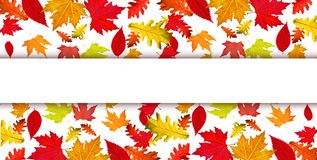 Leaves falling strip autumn background. For autumn background stock images