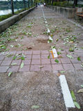 Leaves falling after strong winds. Foliage leafage pathway leavesfall jogging park bangkok Stock Photography