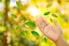 Leaves falling to beautiful woman hand over nature autumn forest ,fall season,world environment day. Green and yellow leaves falling to beautiful woman hand over stock photos