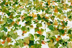 Leaves Fell Stock Images