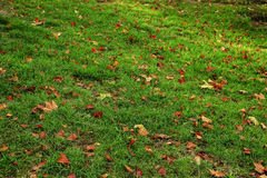 Leaves fell in profusion Royalty Free Stock Images