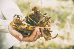 Leaves in female hands Royalty Free Stock Photography
