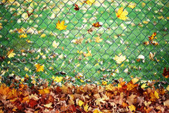 Leaves on a fence Stock Photos