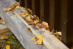 The leaves of the fence Royalty Free Stock Photography