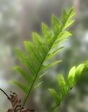 Leaves fern. The leaves fern are growing in rainy season stock image