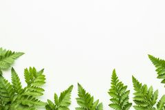 Leaves fern pattern on white copy space background. Tropical Botanical nature concepts design Stock Photo