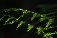 The leaves of ferns highlighted the sun. Stock Photo