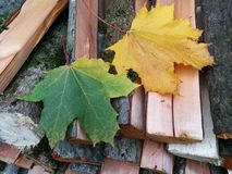 Leaves and firewood. Palette of colors on firewood Stock Photo