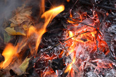 Leaves in flames Stock Photography
