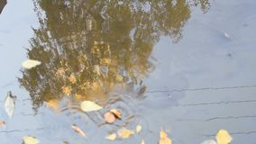 The leaves float in a puddle in autumn in Sunny windy weather stock footage
