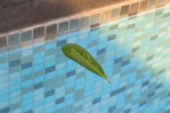 Leaves floating in the pool with a nice tree reflection off in the corner. It`s autumn and that`s the season when all these leaves Stock Images