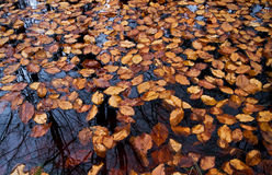 Leaves floating on water Stock Photo