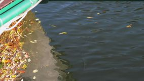 The leaves floating on the water stock footage