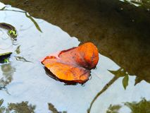 Leaves floats on the water. Clear water with reflection of shadows and leaves that floats, making more value in this Photo Royalty Free Stock Photos