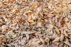 Leaves on the floor Royalty Free Stock Photos