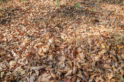 Leaves on the floor Royalty Free Stock Photo