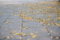 Leaves on the floor. Many yellow leaves on the floor royalty free stock photo