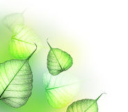Leaves.Floral design. Beautiful Floral Design made from the real dried transparent leaves Stock Images
