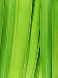 Leaves of a flower of a gladiolus Stock Photos