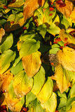 Leaves in a flowerbed Stock Image