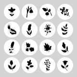 Leaves and flowers icons set. Vector design elements. It can be used as - logo, pictogram, icon, infographic element Royalty Free Stock Images