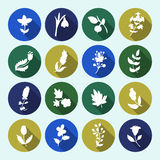 Leaves and flowers icons set. Vector design elements. It can be used as - logo, pictogram, icon, infographic element Royalty Free Stock Photography