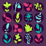 Leaves and flowers icons set. Vector design elements. It can be used as - logo, pictogram, icon, infographic element Stock Photos