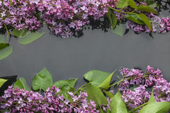 Leaves and flowers lilac in water Royalty Free Stock Images