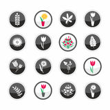 Leaves and flowers pictogram set Royalty Free Stock Image