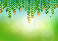 Leaves and flowers with soft bright bokeh and sunlight, fresh green nature background. Vector illustration vector illustration