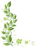 Leaves, flowers, spring Royalty Free Stock Photos
