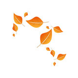 Leaves flying. Orange leaves flying with the wind. Autumn background Stock Photo