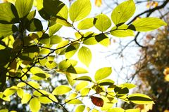 Leaves in forest Stock Photography