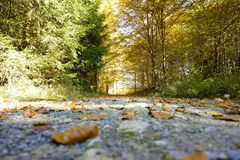 Leaves on forest path. In autumn on sunny day Stock Image