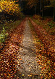 Leaves on a forest path Royalty Free Stock Image