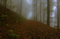 Leaves on a forest path Royalty Free Stock Photography
