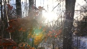 Leaves in forest in sunny day. Outdoor landscape footage leaves in snowy forest in sunny day stock footage