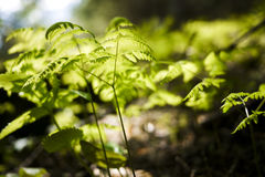 Leaves in a forest in Val di Mello, Alps Mountains, Italy Stock Image