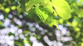 Leaves in forest and wind stock footage