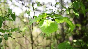 Leaves in forest and wind with view on street stock footage