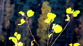 Leaves found at the tree tops stock video footage